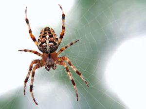 Araignée par ed-van-duijn