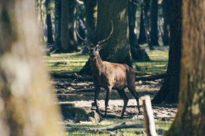 Cref dans la forêt de Rambouillet