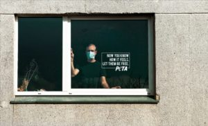 Campagne pub PETA